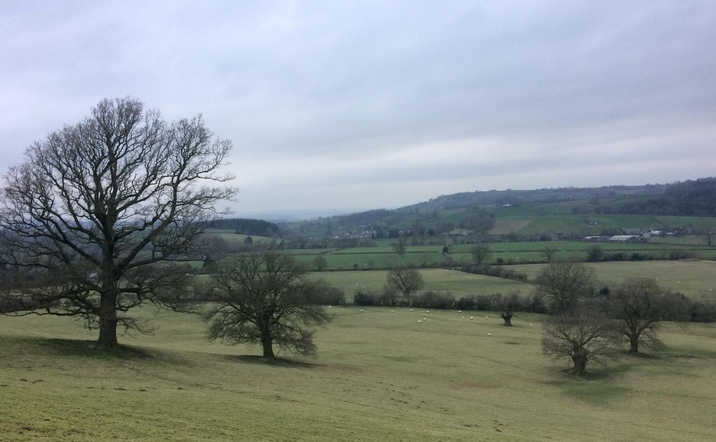 7 bck oak