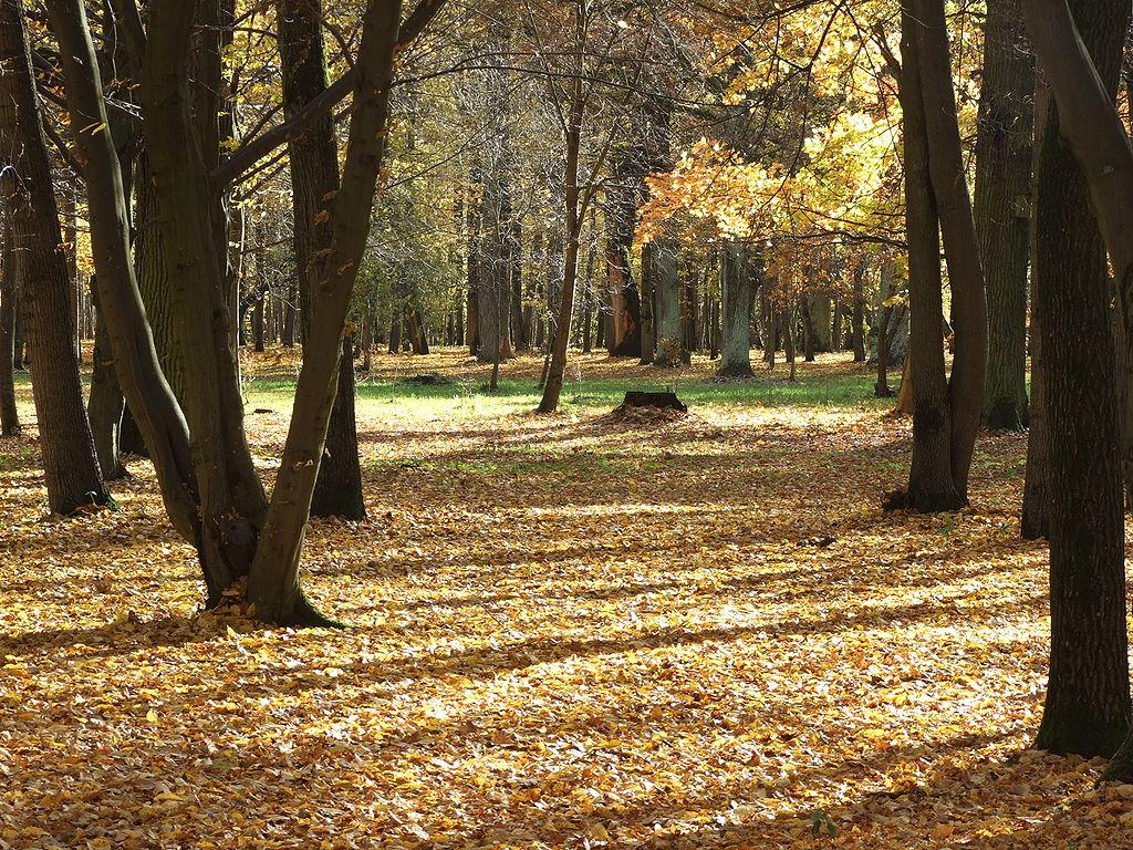 1024px-Oak_forest_park